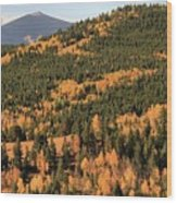 Fall Colors At Rocky Mountain National Park Wood Print