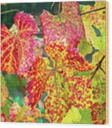 Fall Colors At The Vineyard Wood Print