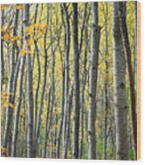 Fall Colors In Maine 2 Wood Print