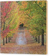 Fall Colors In Oregon Wood Print