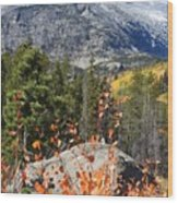 Fall Colors In Rocky Mountain National Park Wood Print