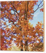 Fall Colors Looking Awesome Wood Print