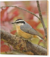Fall Colors Nuthatch Wood Print