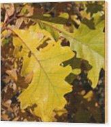 Fall Colours Wood Print