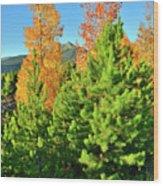 Fall Comes To Dillon Colorado Wood Print