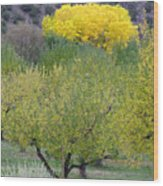 Bright Yellow Leaves, Dixon New Mexico Wood Print