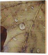 Fall Droplets Wood Print