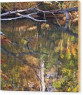 Fall Fallen Wood Print