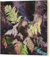 Fall Ferns Wood Print