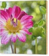 Fall Flower Garden Wood Print