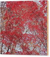 Fall Foilage Wood Print