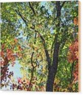 Fall Foliage Wood Print