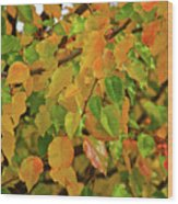 Fall Foliage II Wood Print