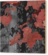 Fall Foliage In Pennsylvania Wood Print