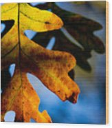Fall Foliage Leaf Near Ruidoso Nm Wood Print