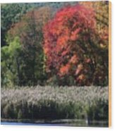 Fall Foliage Marsh Wood Print