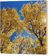 Fall Foliage Near Ruidoso Nm Wood Print