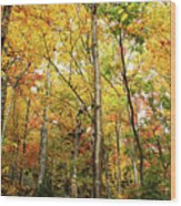 Fall Foliage On The Hike Up Mount Monadnock New Hampshire Wood Print