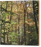 Fall Forest 2 Wood Print
