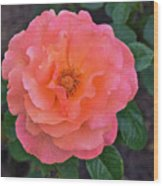 Fall Gardens Full Bloom Harvest Rose Wood Print