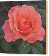 Fall Gardens Rosh Hashana Rose Wood Print