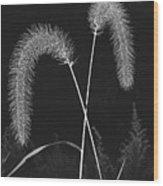 Fall Grass 2 Wood Print