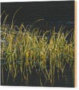 Fall Grasses - Snake River Wood Print