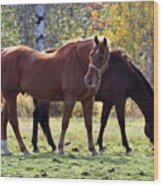 Horses Fall Grazing Wood Print
