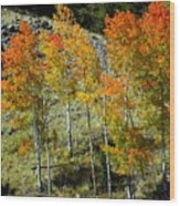 Fall In Colorado Wood Print