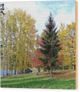 Fall In Kaloya Park 1 Wood Print