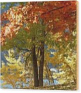 Fall In Kaloya Park 4 Wood Print