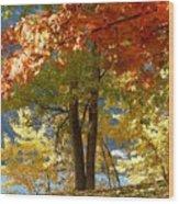 Fall In Kaloya Park 4 Wood Print