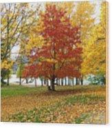 Fall In Kaloya Park 5 Wood Print