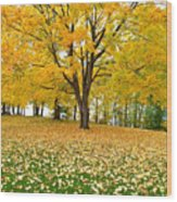 Fall In Kaloya Park 7 Wood Print