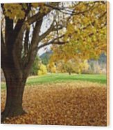 Fall In Kaloya Park 8 Wood Print