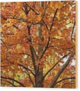Fall In Kayloya Park 2 Wood Print