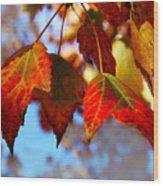 Fall In Maple Ridge Wood Print