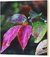 Fall In Shades Of Purple Wood Print