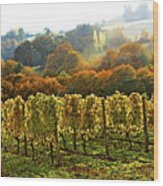 Fall In The Red Hills Of Dundee Wood Print
