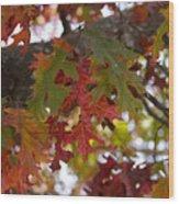 Fall In Virginia Wood Print