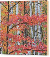 Fall Layers Wood Print