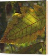 Fall Leaf 2010 Wood Print
