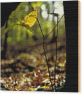 Fall Leaf And Twig Wood Print