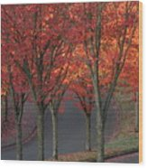 Fall Leaves Along A Curved Road Wood Print