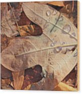 Fall Leaves And Dew 8 2017 Wood Print
