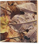 Fall Leaves And Dew 9 2017 Wood Print