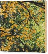 Fall Leaves In The Smokies Wood Print