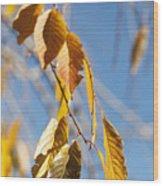 Fall Leaves Study 3 Wood Print