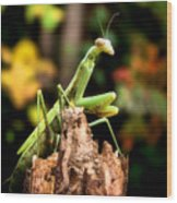 Fall Mantis Wood Print by Karen M Scovill