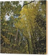 Fall Maple In Yosemite Wood Print